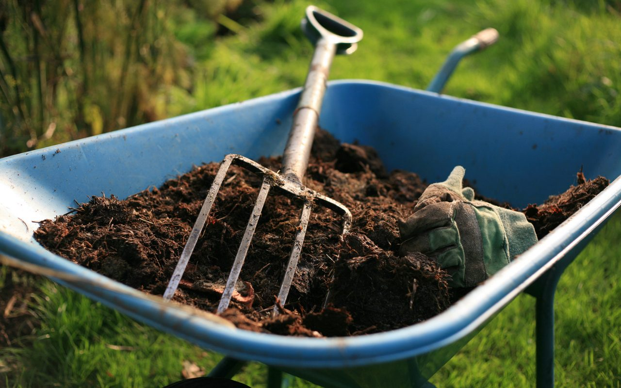 How to Tell if Your Soil is Alright?