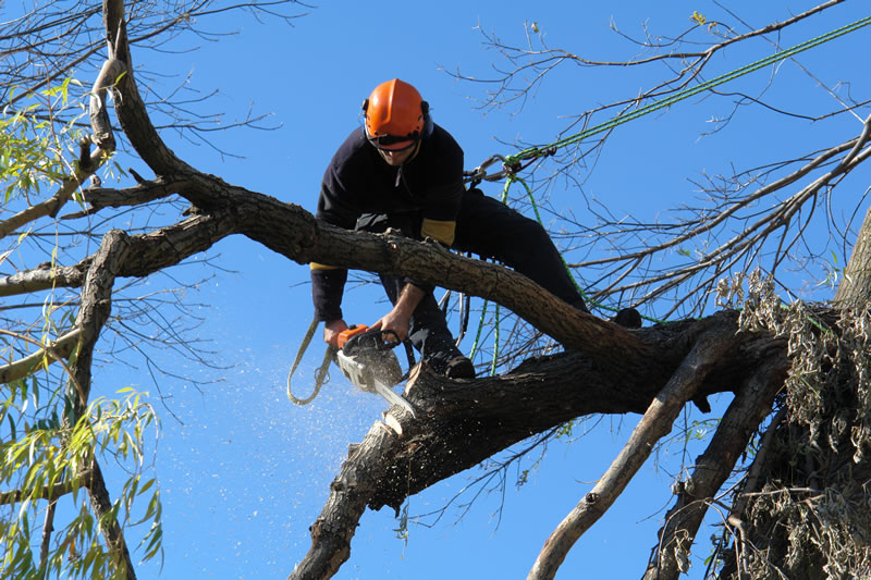 What is the Tree Removal and Pruning Service
